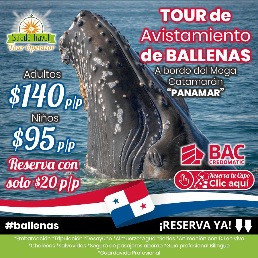 Tour de Avistamiento de BALLENAS